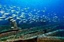 DIXIE-fishies